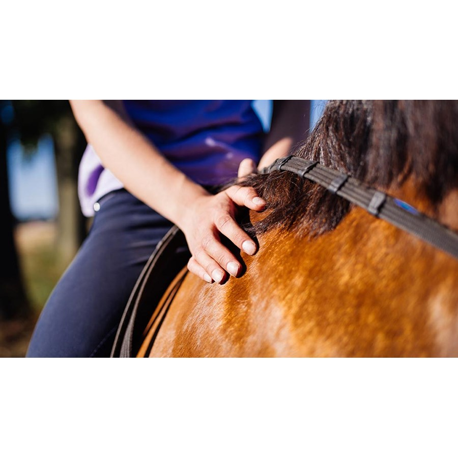 Cropped image of a girl sitting astride a horse caringly touching it's glossy side  Foto: wundervisuals