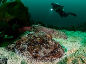 Class B Normalwide-angle with diver - Niklas Nilsson